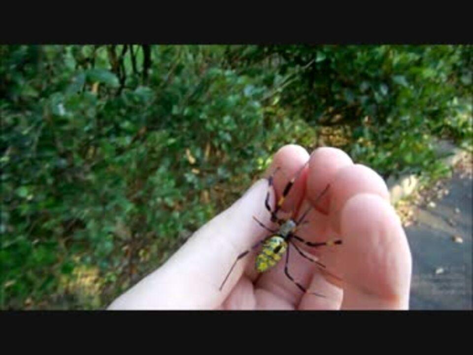 ジョロウグモの画像 p1_17