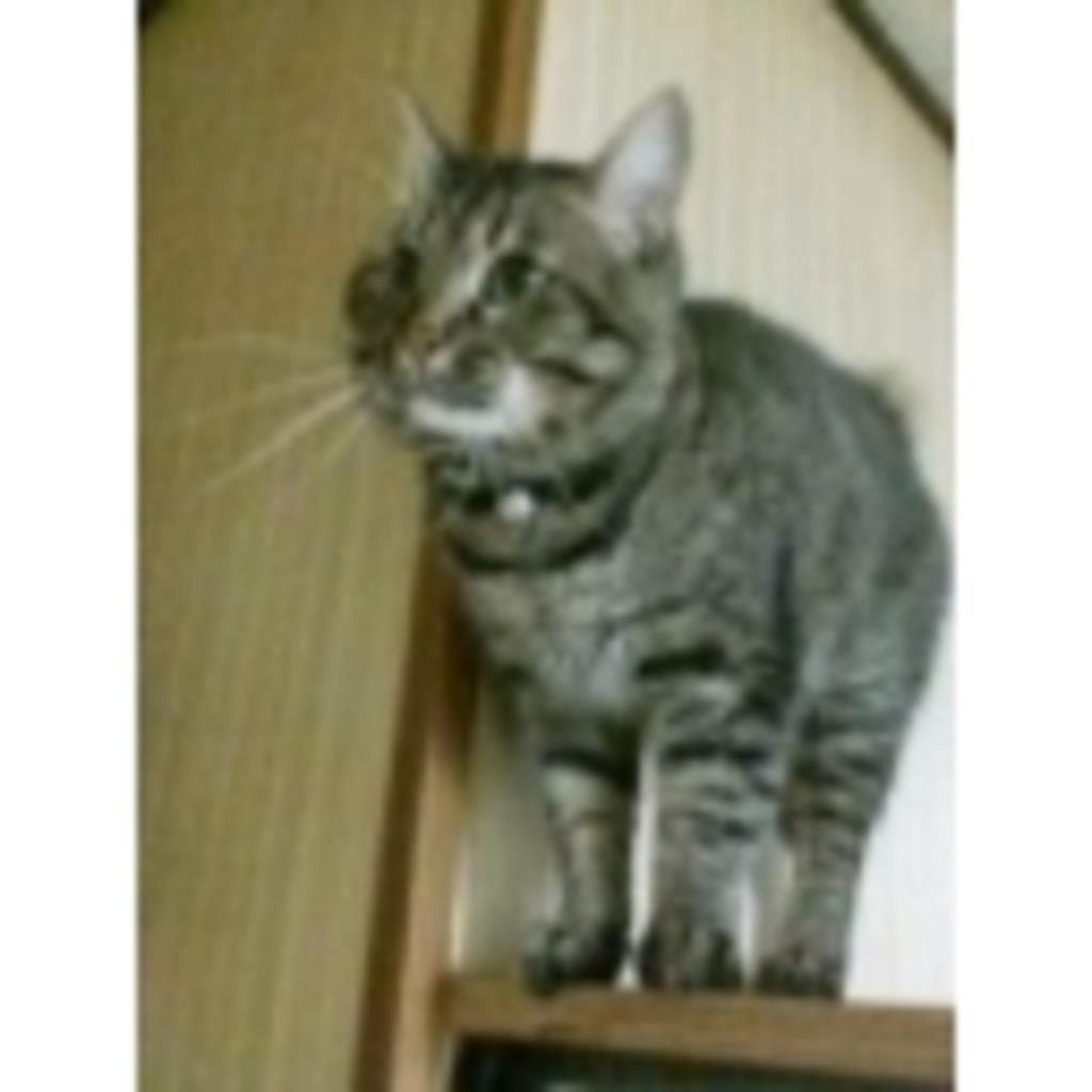 招き猫大吉クラブ