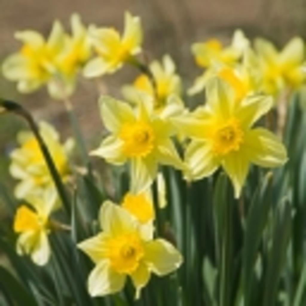雪中花の咲くころから