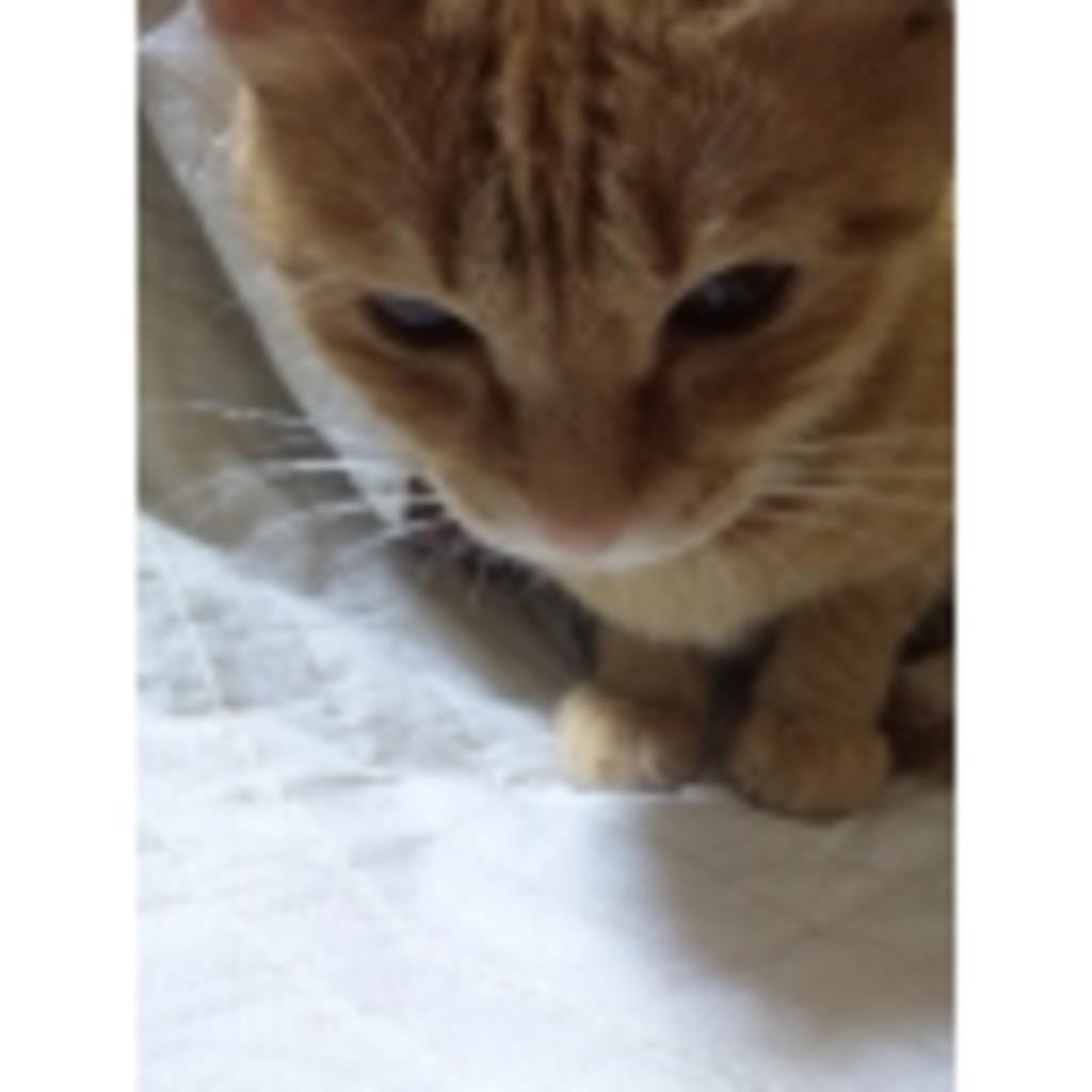猫ちゃん愛してます(┏`・ω・)┏