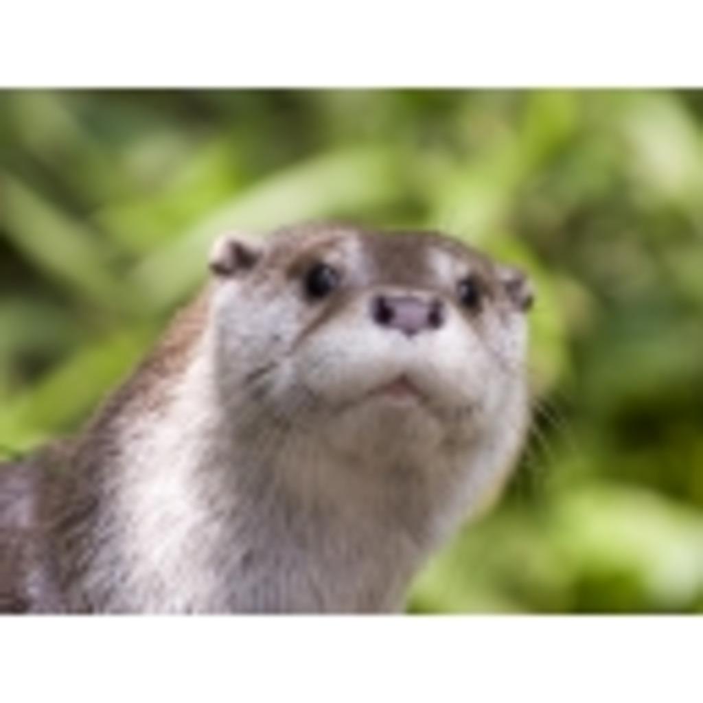 【もけー】Not your Otter!!