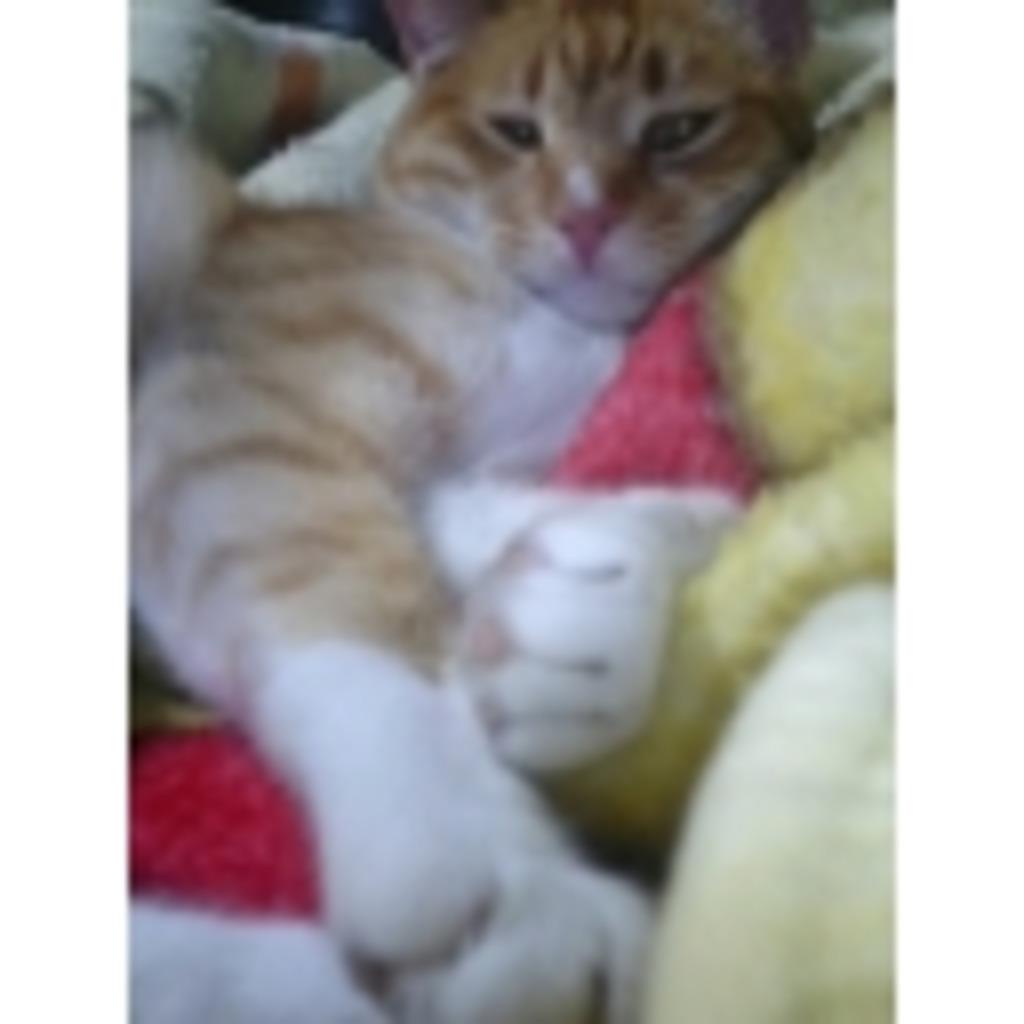 (。・д・。)どか~ん new猫パンチ