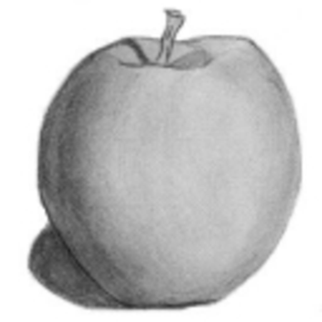 無農薬りんご農園
