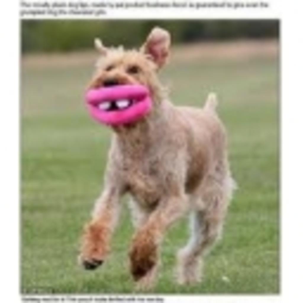 前歯が特徴ですの(*´・.・`*)