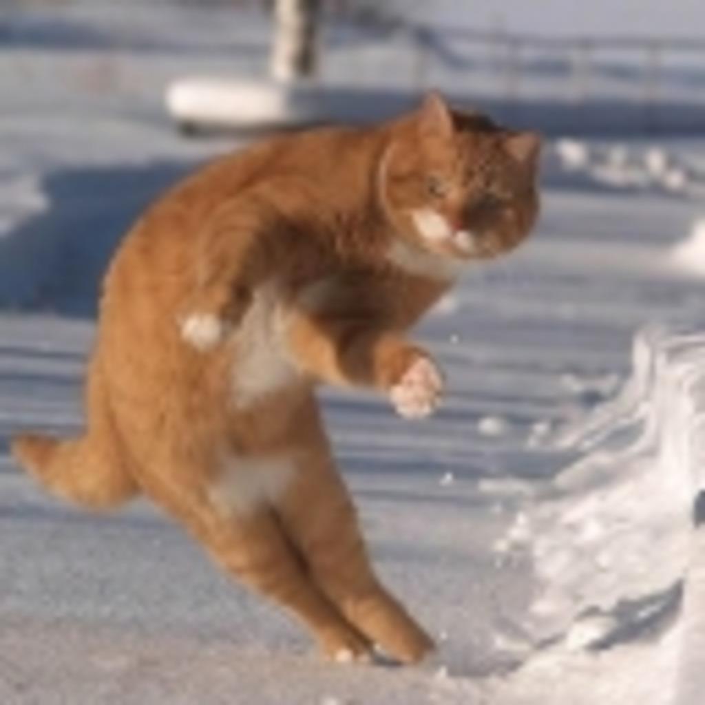 猫騎士(♂)のネコタワー