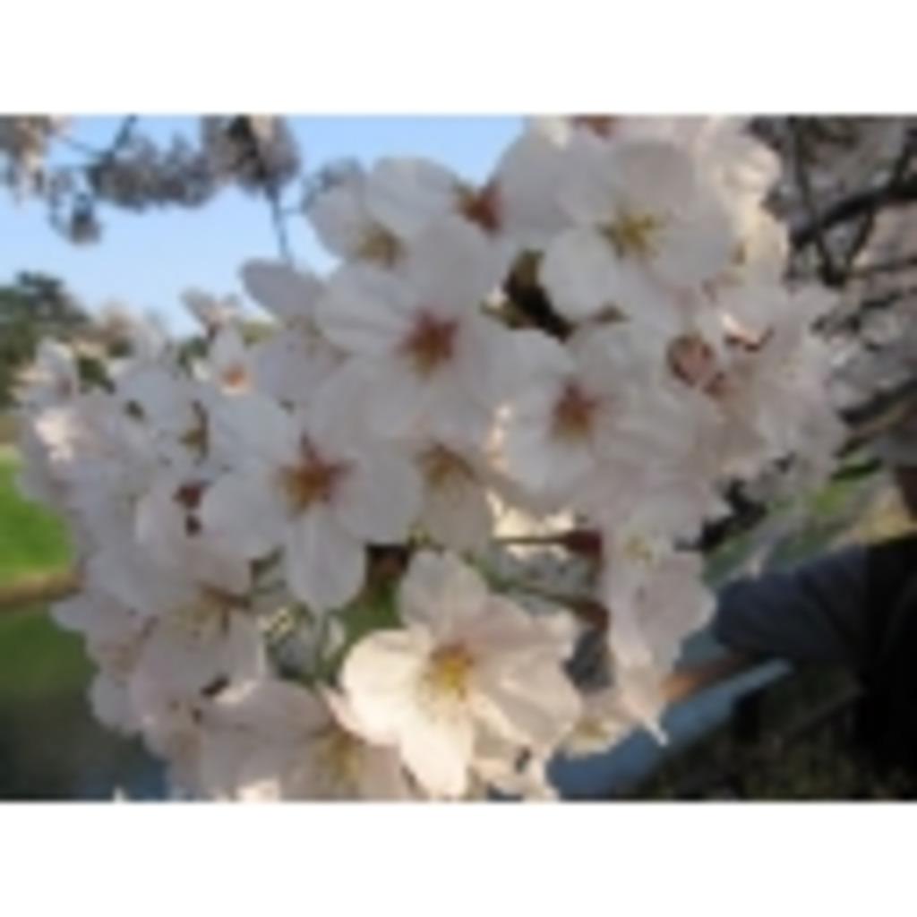 櫻花ちゃんねる
