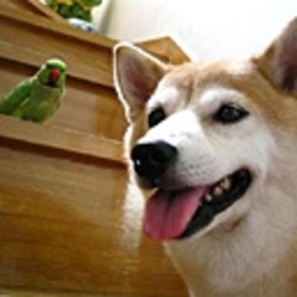ローズ&柴犬りょう