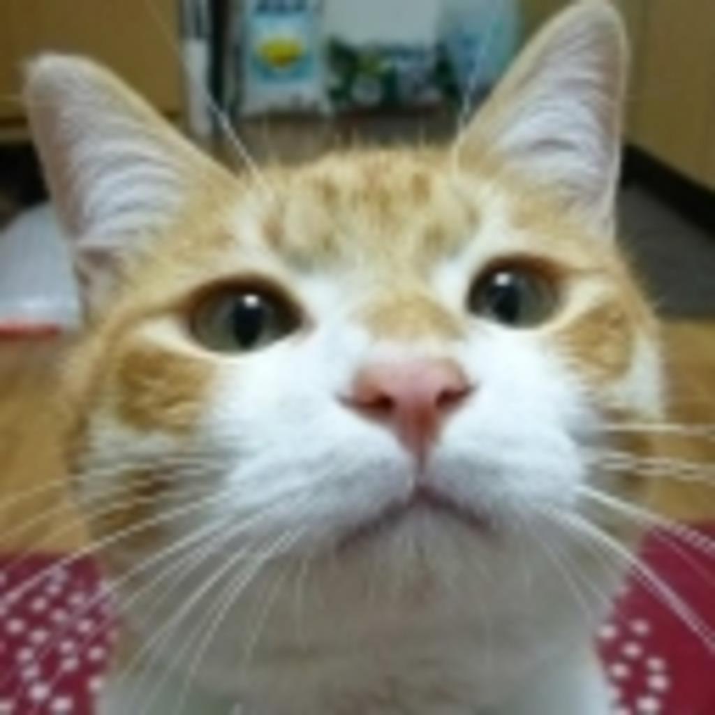 猫撫でゲーム