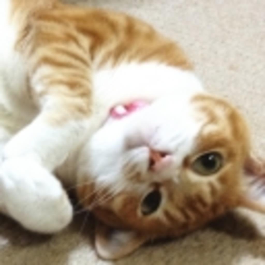 猫の名前は「2号」です!