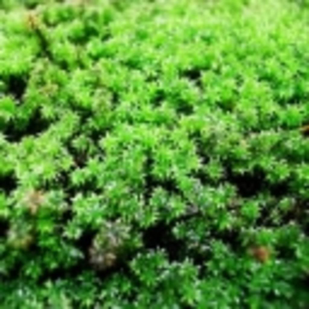 ノスグリーンの森