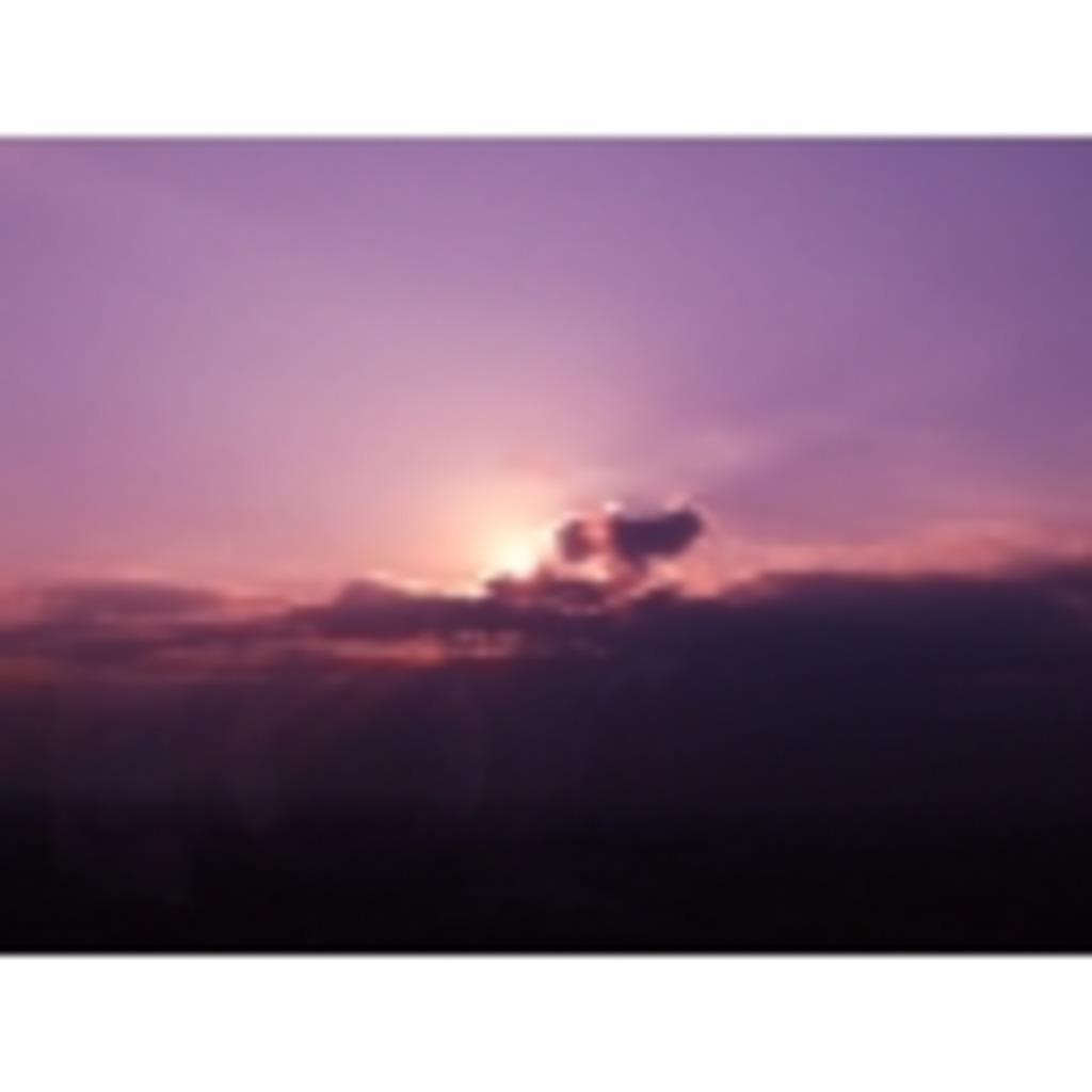 秋風に吹かれる紫花