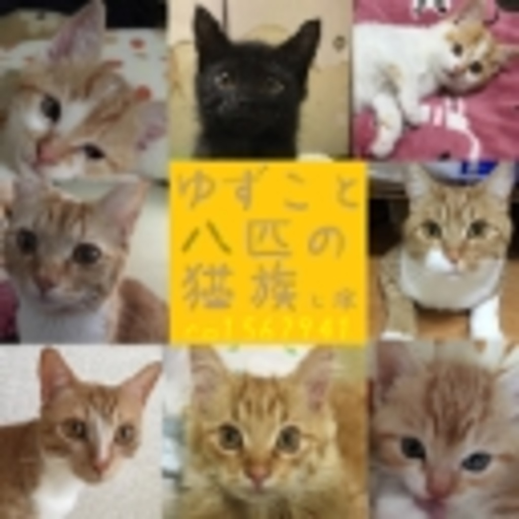 ゆずこと八匹の猫族と嫁