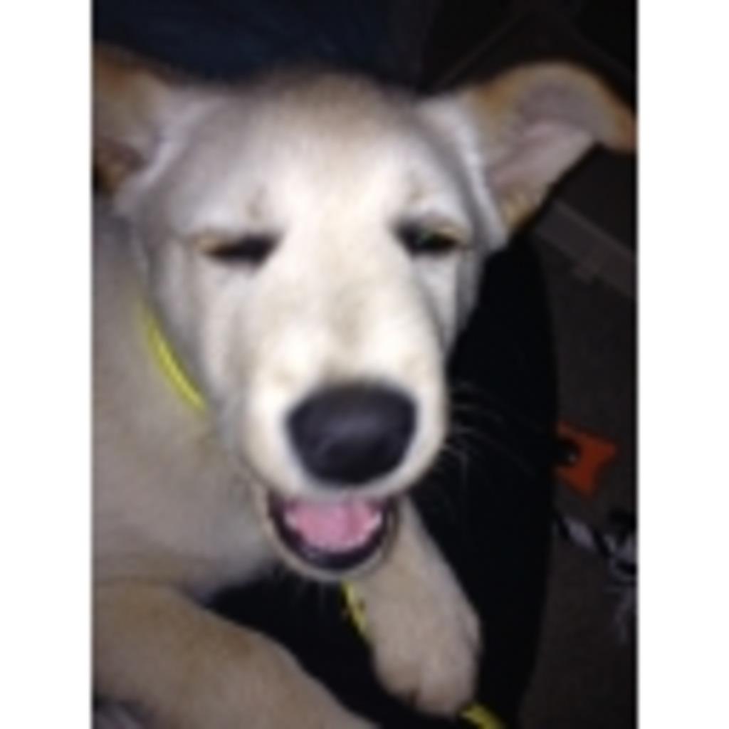 マリオ[犬]の飼い主と雑談