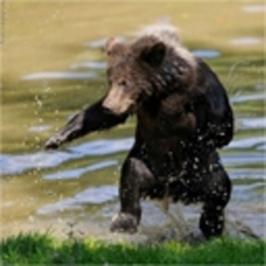 クマが最強であることを証明するコミュ