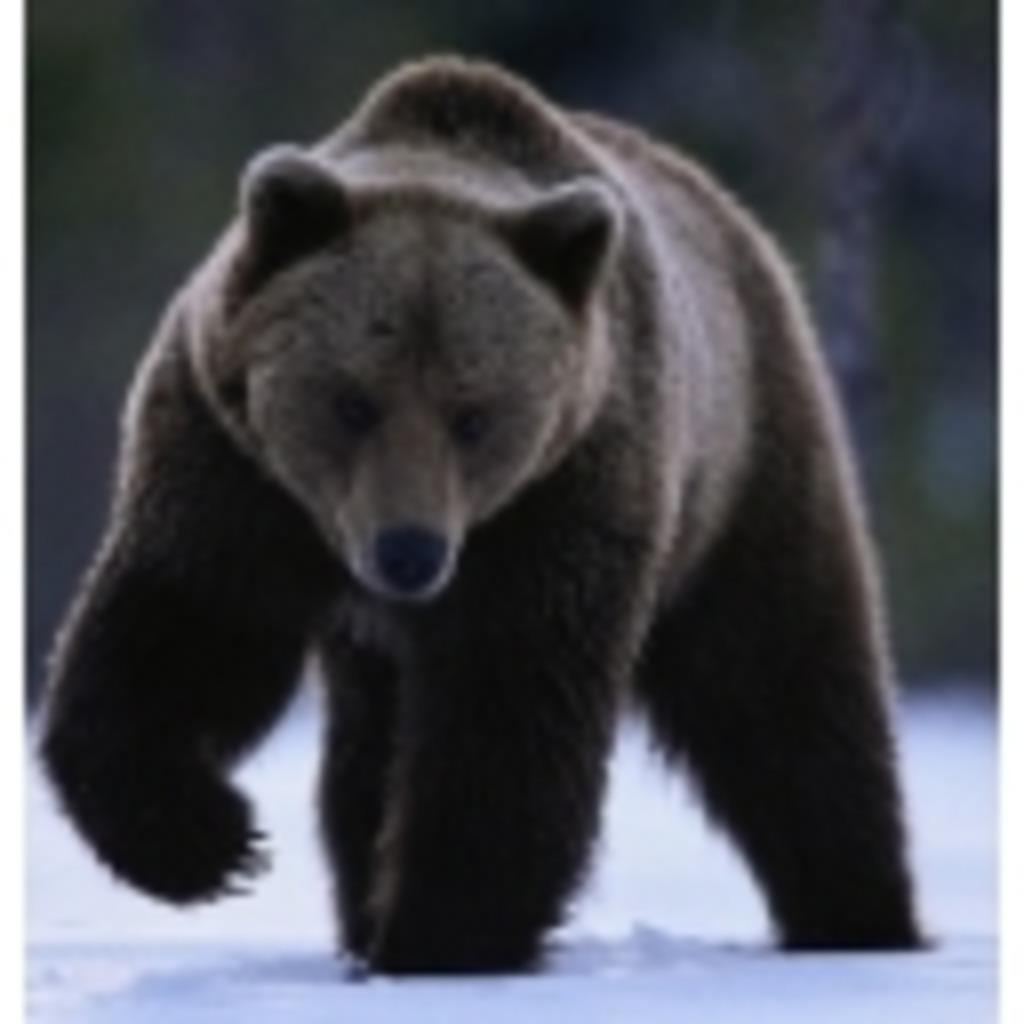 黒熊のダーク放送