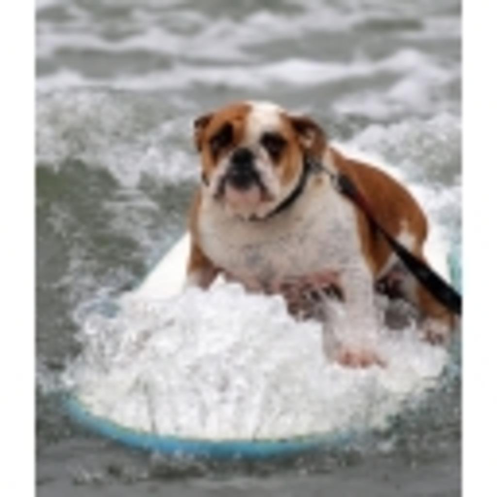 surferの歌練習枠!!!