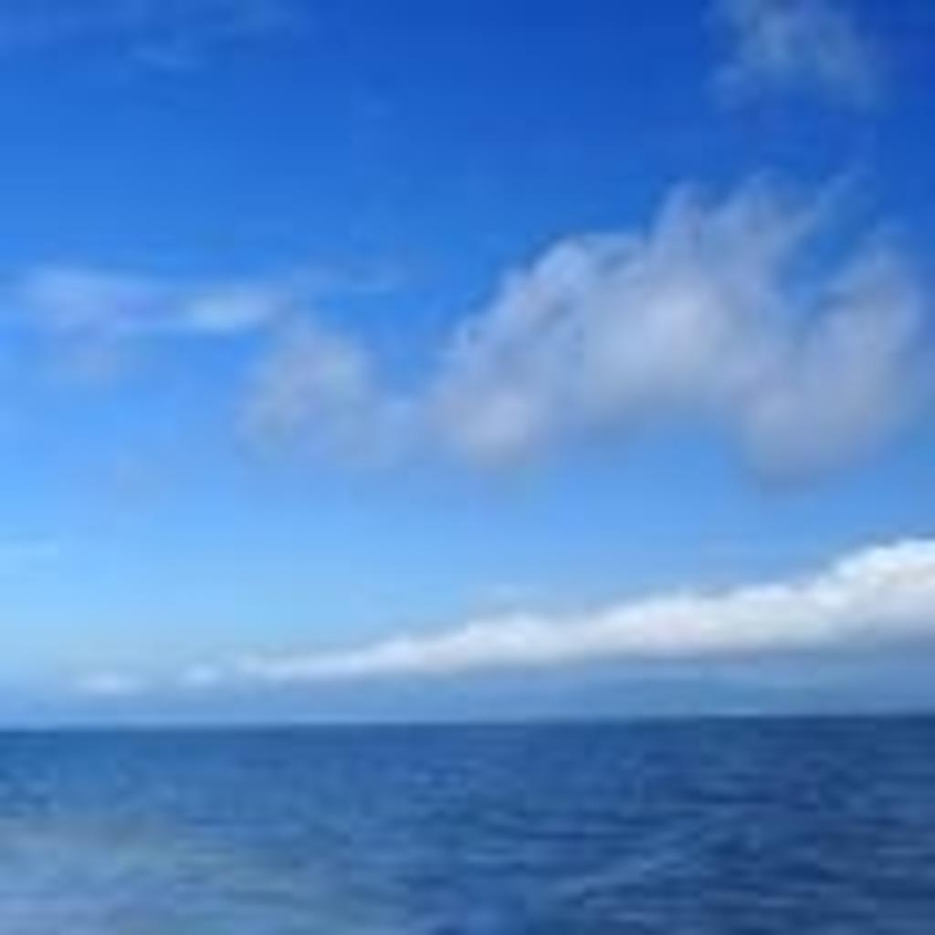 ★海釣太郎の水中映像配信★