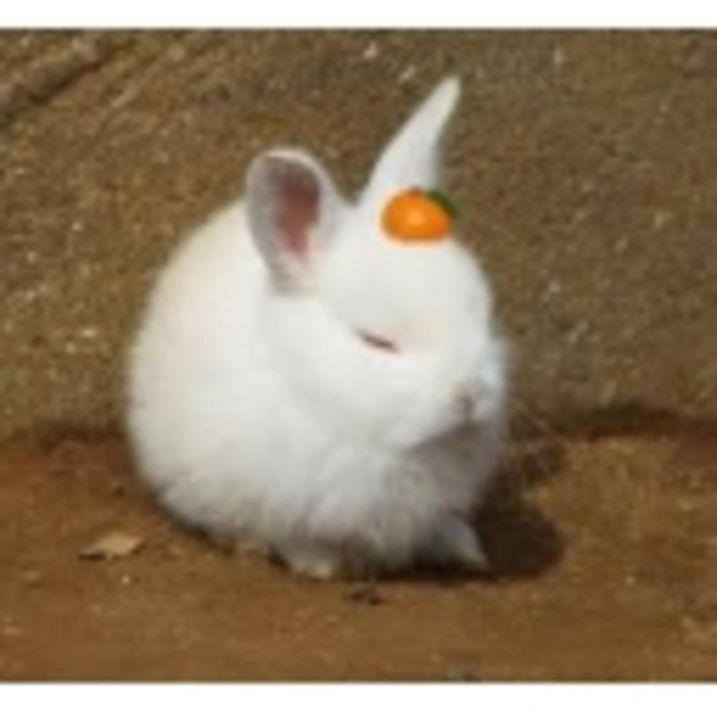 悲しきウサギの隠れ家