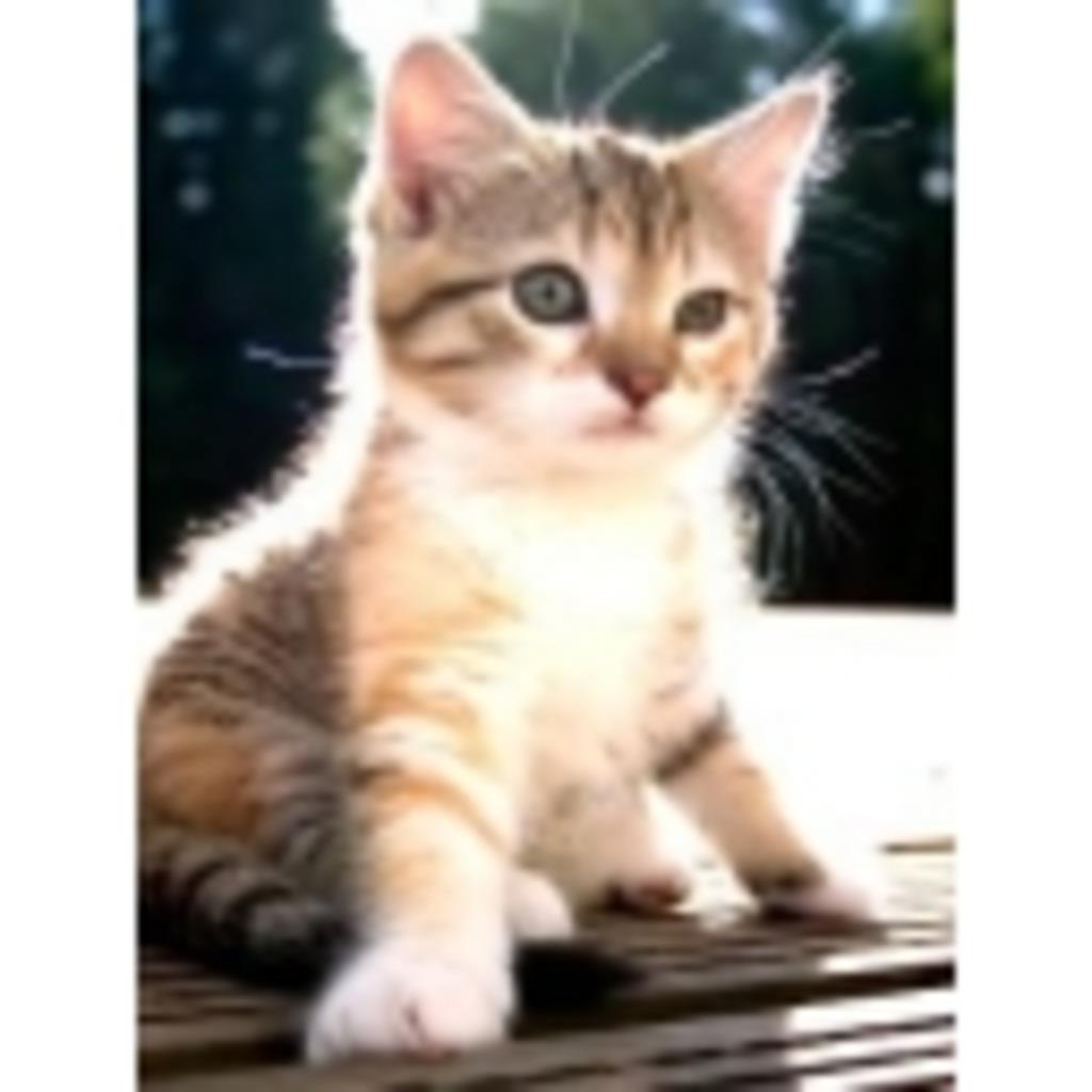 まったり猫日和