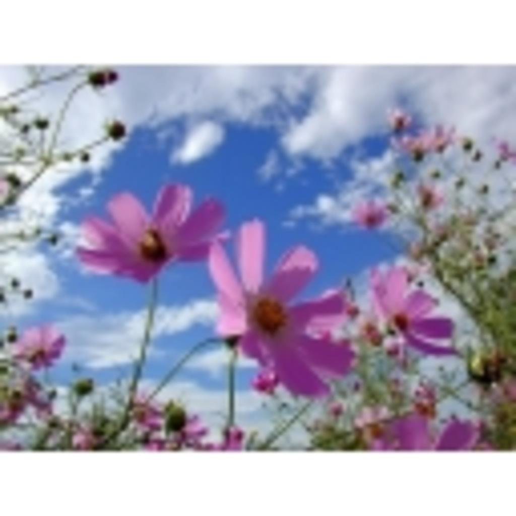 花咲くいつか。