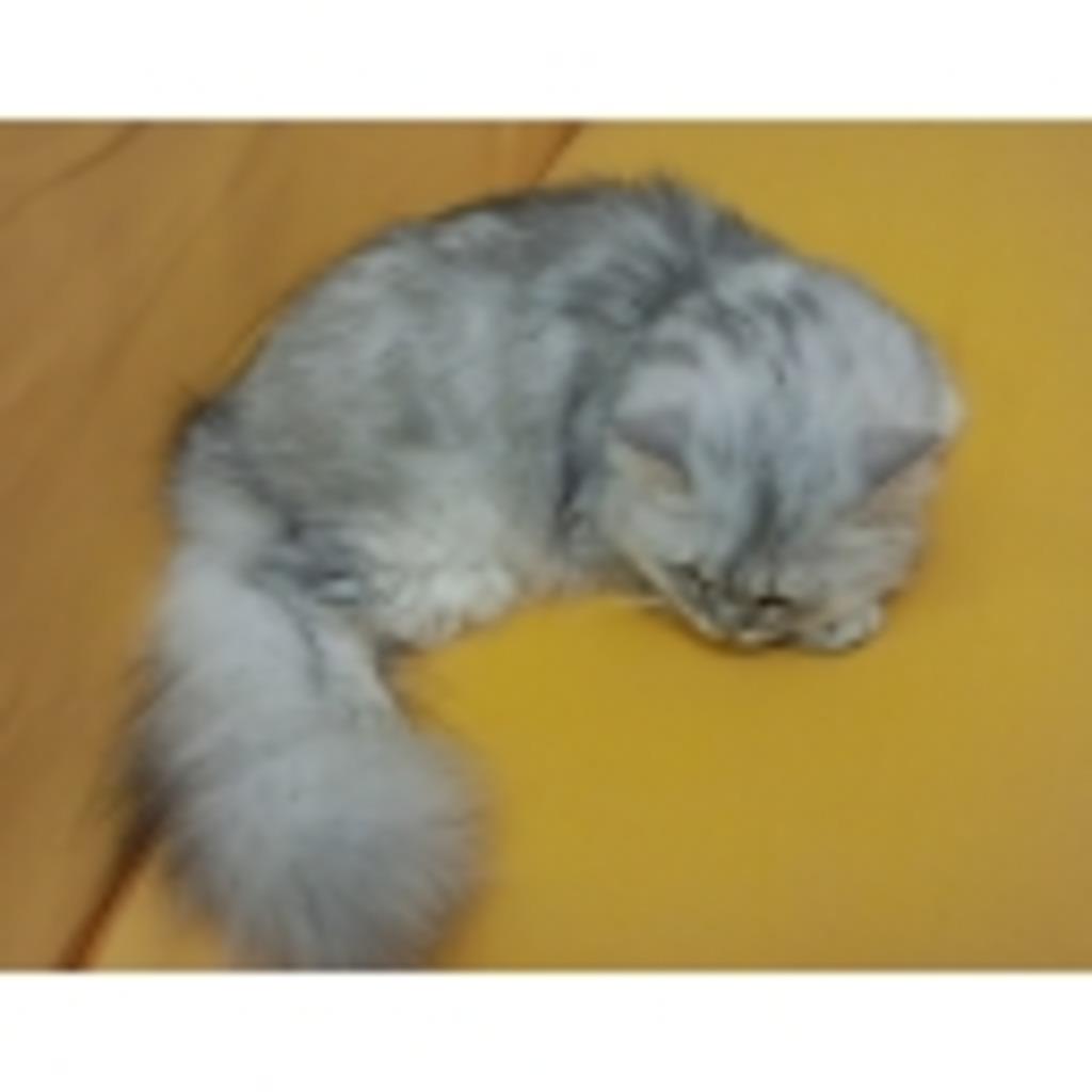 ゲーム配信 猫≡・ω・≡