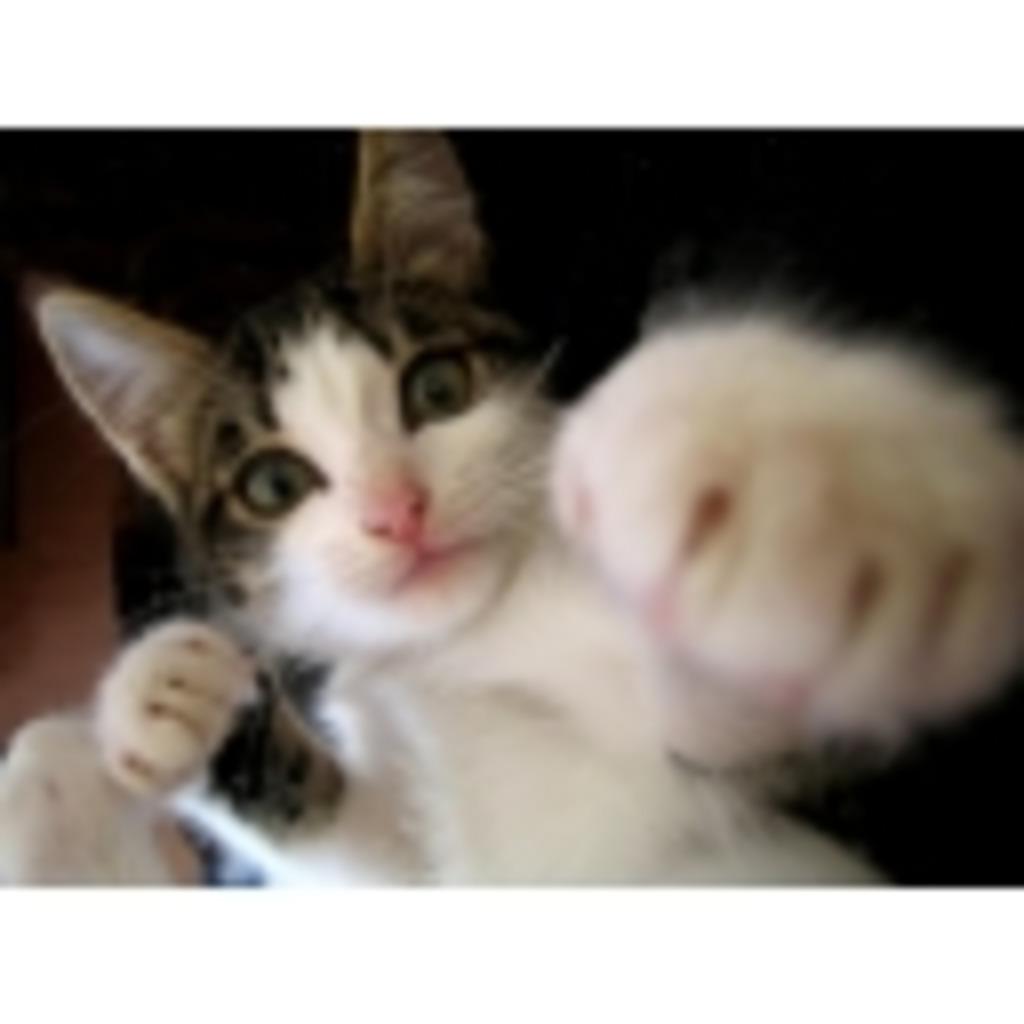 eighterの猫パンチ☆com