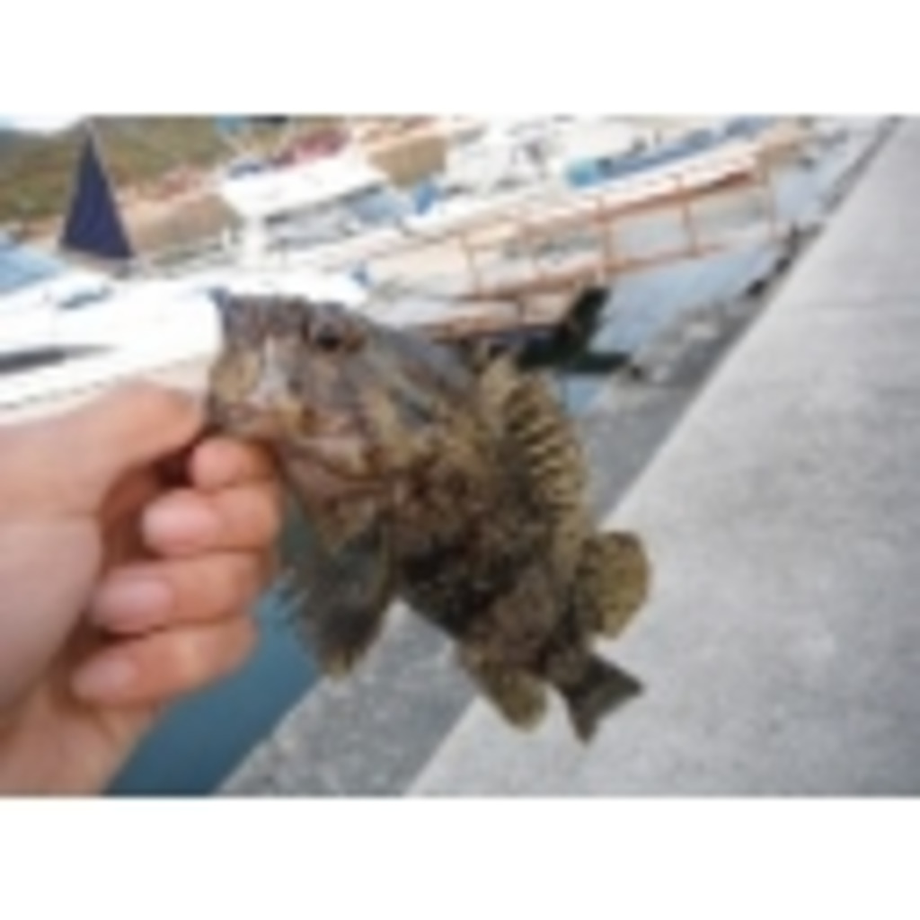 souのコミュニティー 魚釣りとか雑談とか