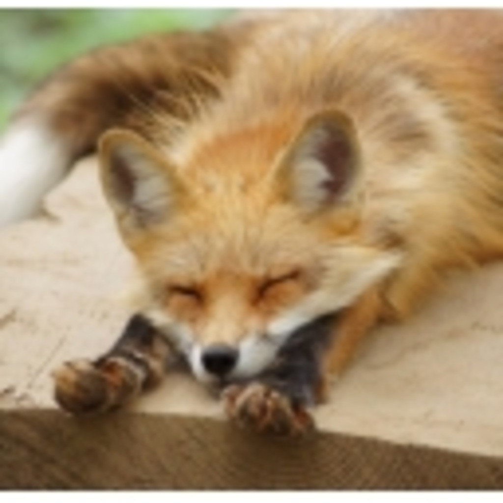 脚と小さい胸が大好きな狐の部屋(*'ω'*)