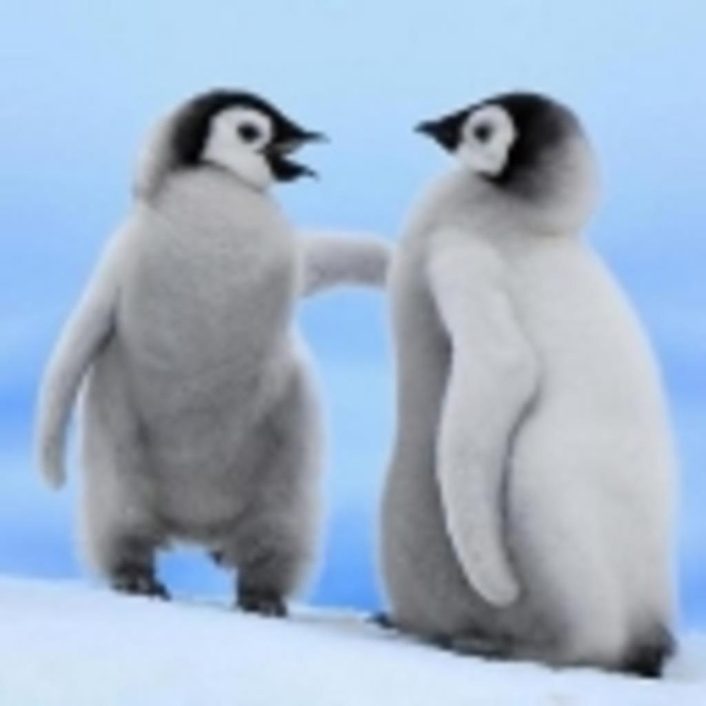 (新) ペンギンって名前の響きだけが好き。