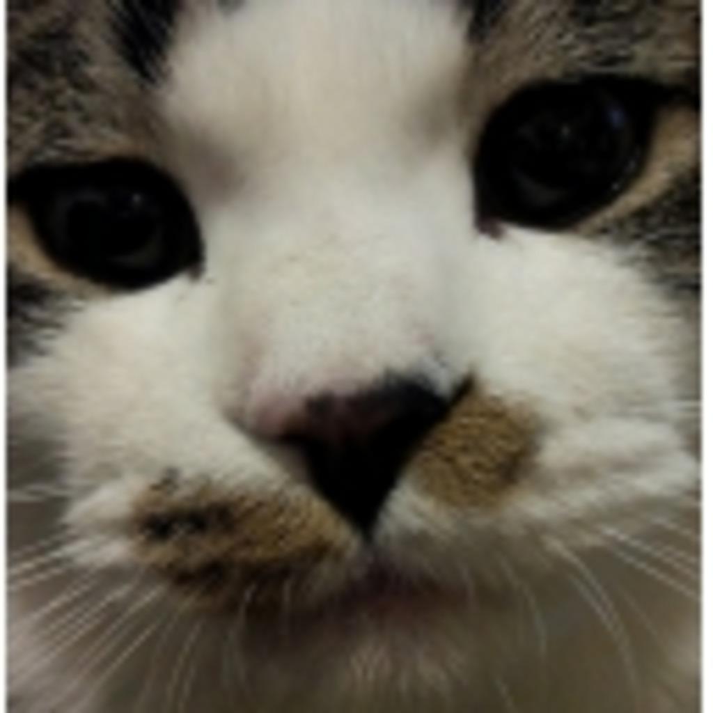おつみかん(猫)