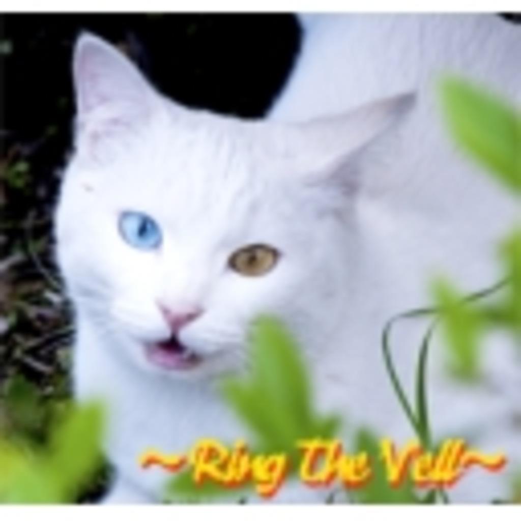 リスナーも主も脚フェチ( ゜ д ゜ ) ~Ring the Vell~