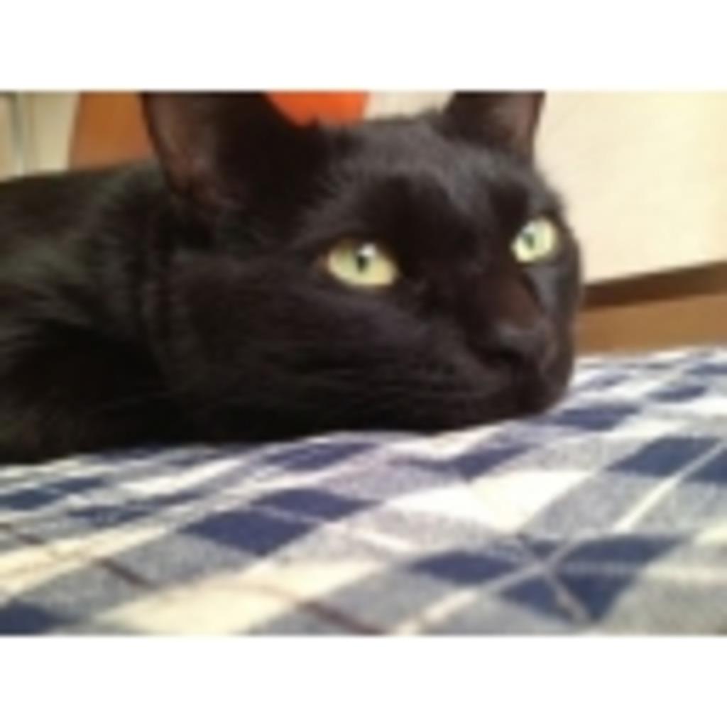黒猫の歩み。