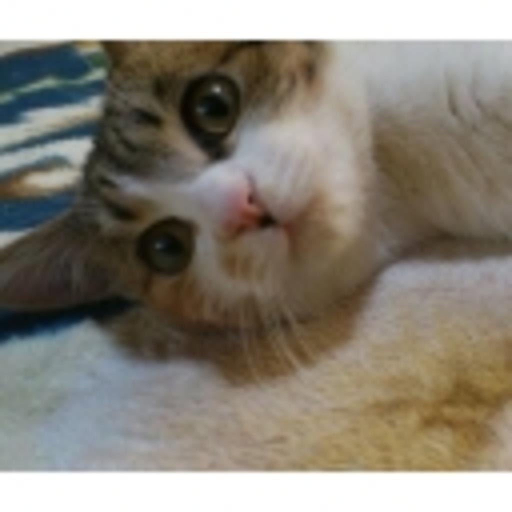 ⊹⊱*⊹たまに猫常に猫我が家の三毛猫⊹⊱*⊹