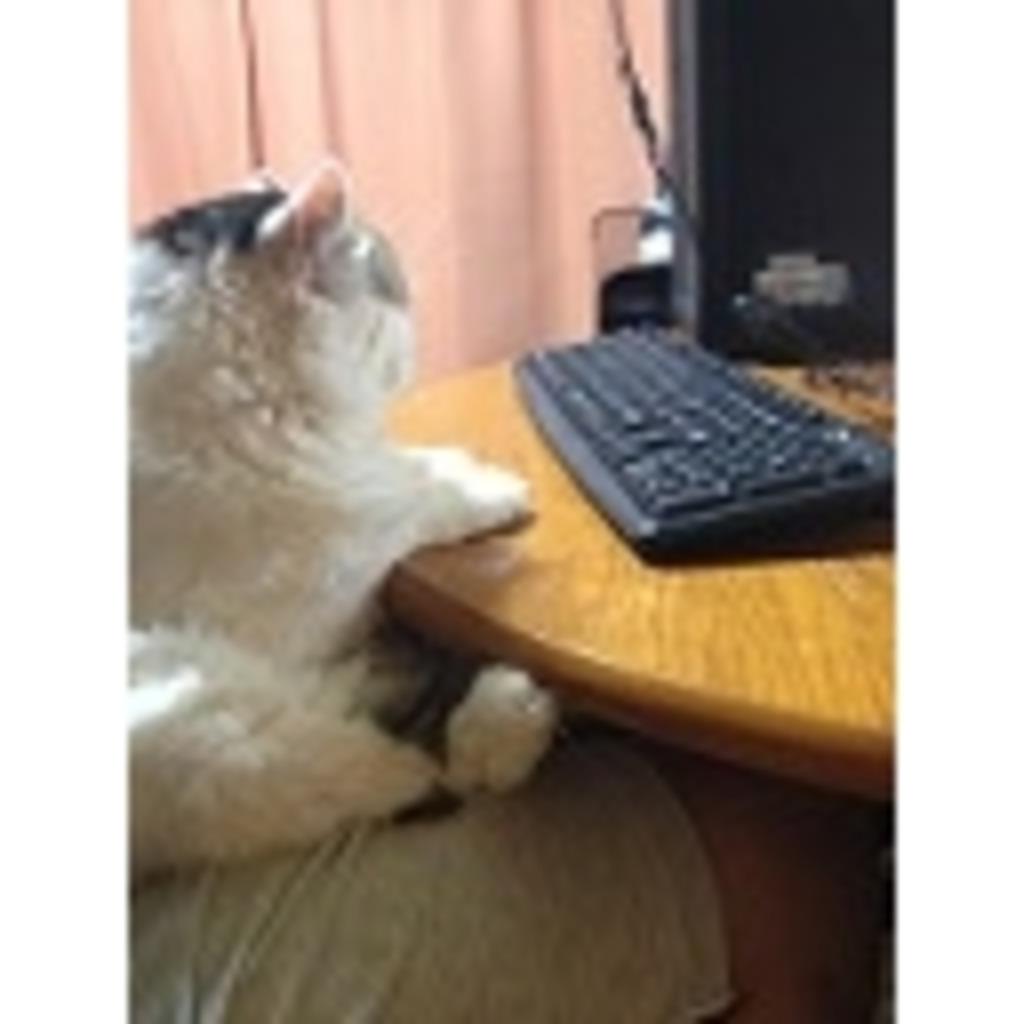 猫の定位置から・・・こんにちは!