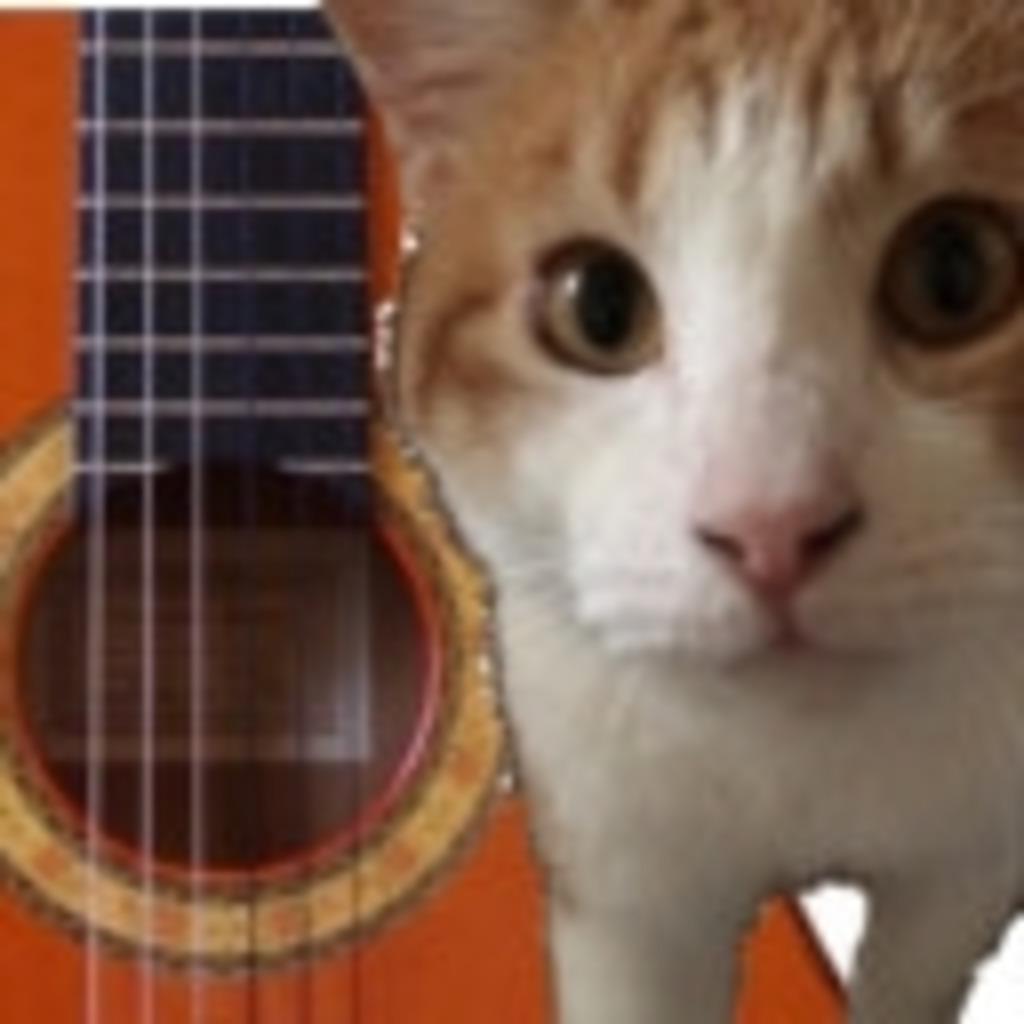 フラメンコギター練習or研究or猫