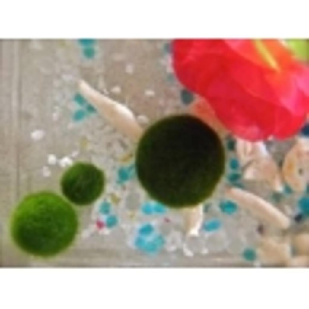 毬藻ゴロゴロ....