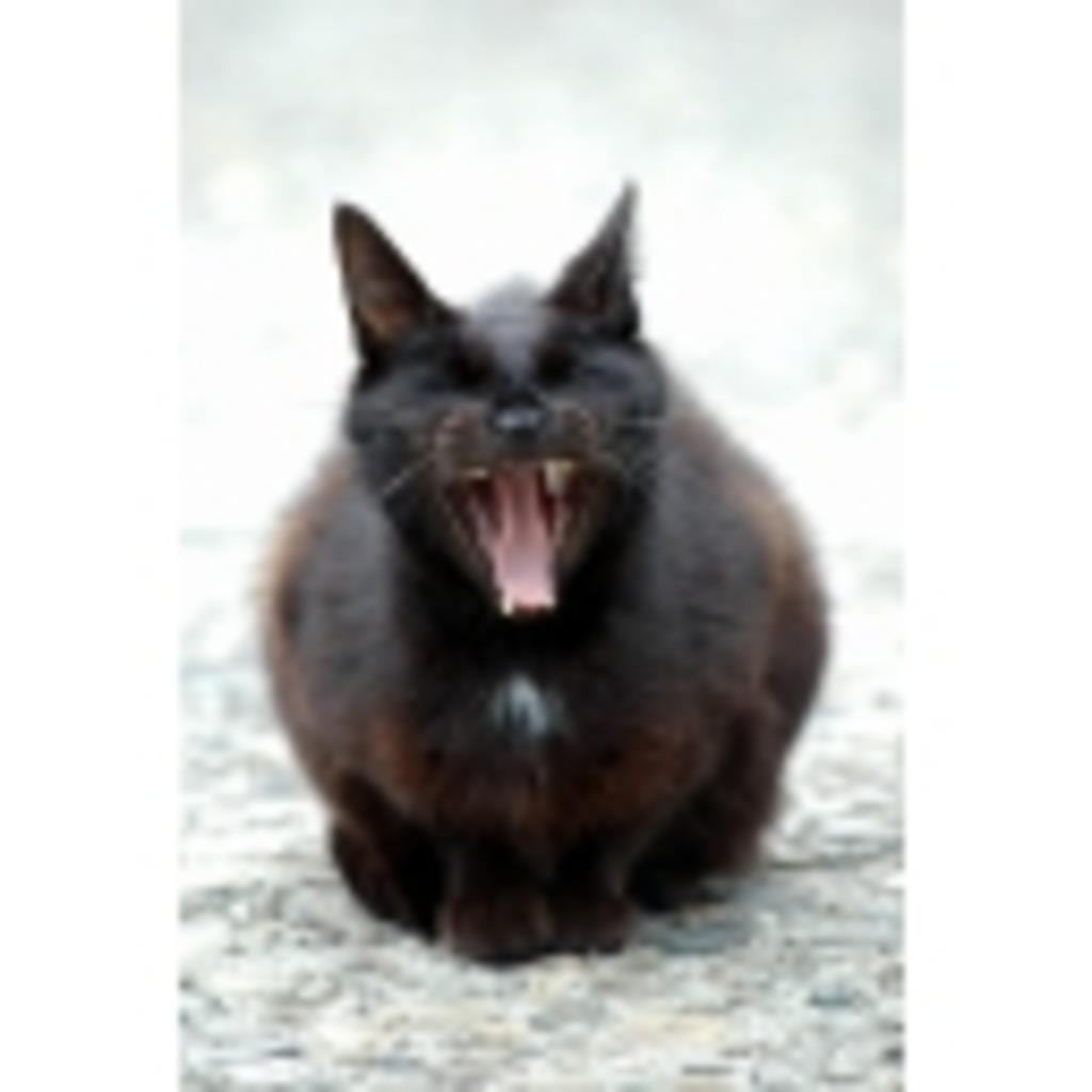 黒猫娘の何かするコミュ