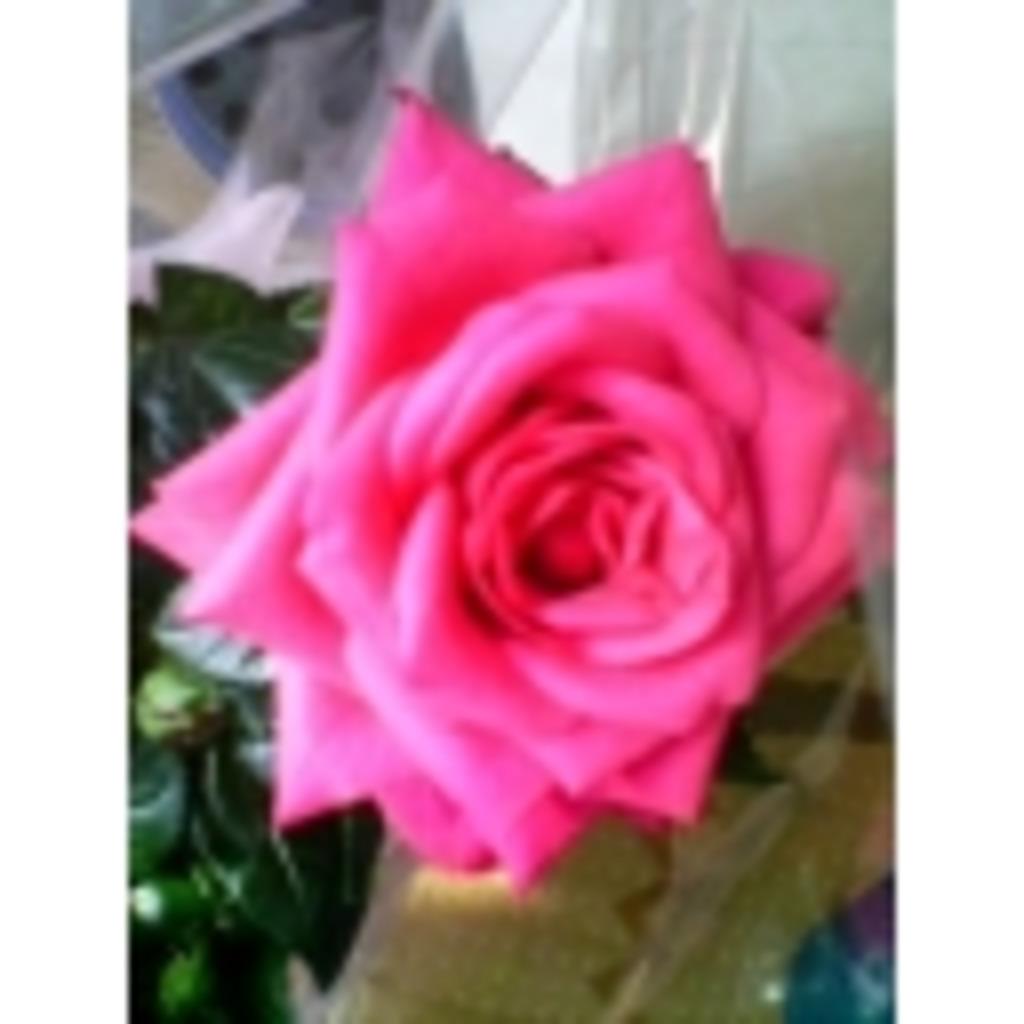 泡沫の世界の薔薇、ふわり。