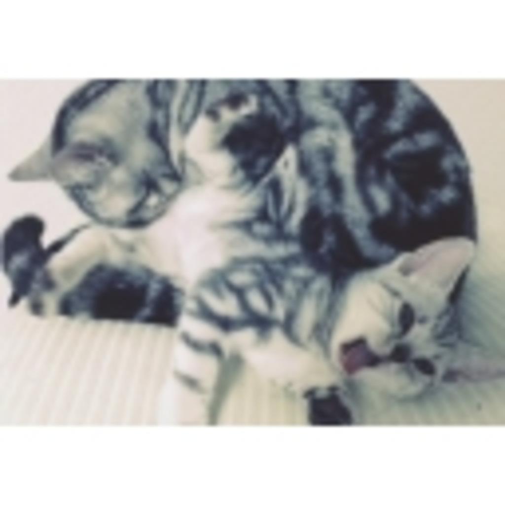 猫と会えるゲーム枠 こぴすけTV
