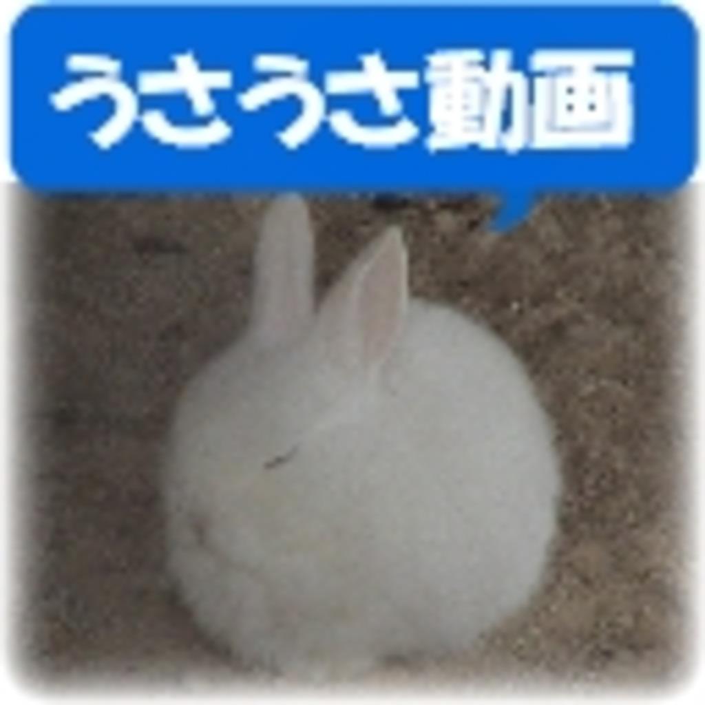 うさぎ~うさうさ動画 (GINZA)~