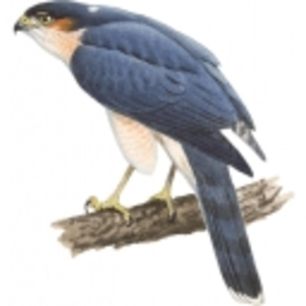 鷹の巣in秋田