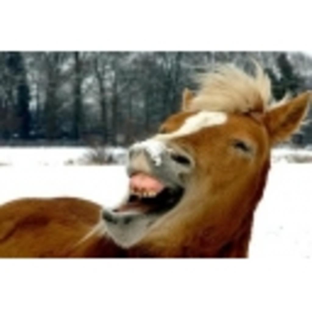 うまっちょの馬なりコミュニティー♪