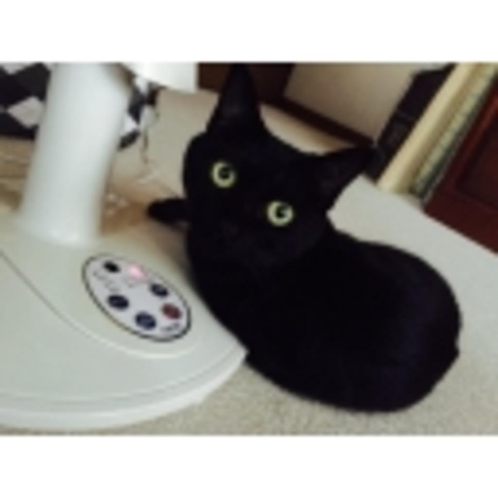 黒猫部ー!!!!!