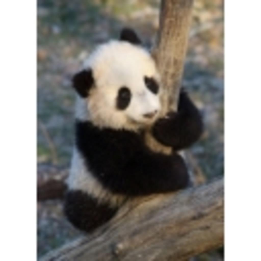 パンダさんが放送してます