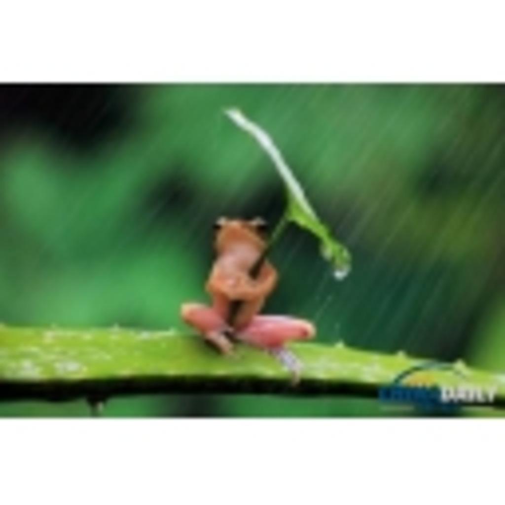 雨蛙の雨宿り