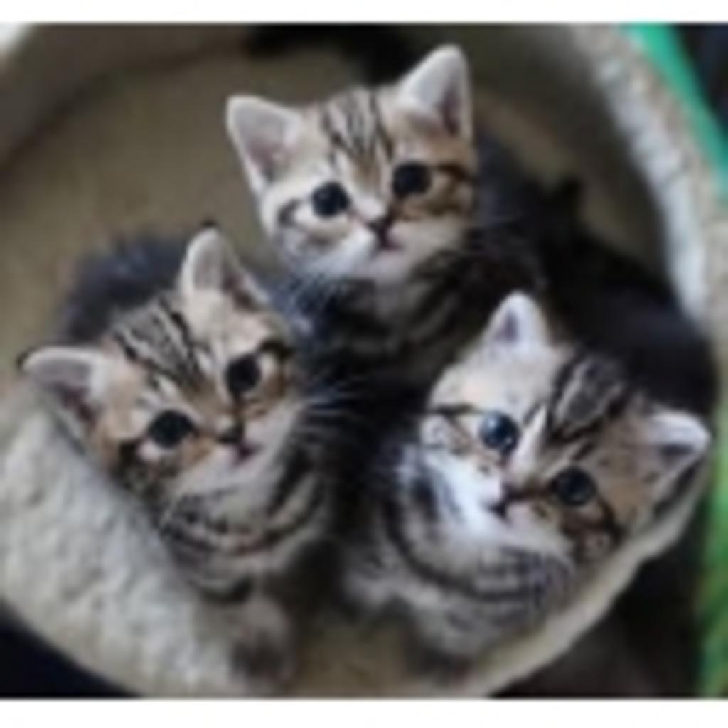 猫好きの気まぐれコミュニティ