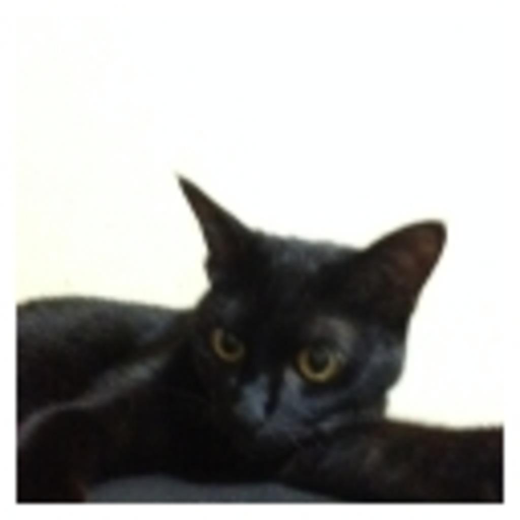 猫好きのゲーム配信