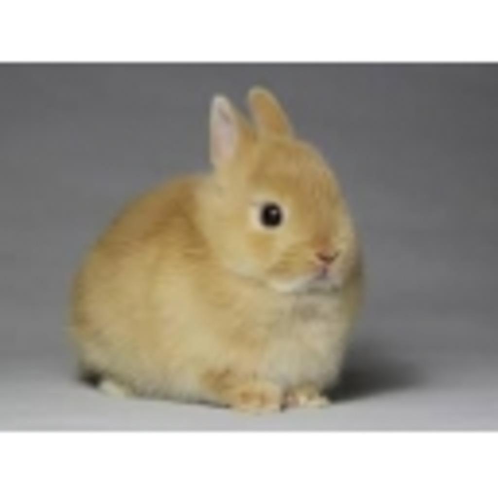 ウサギのウサギによるウサギのためのコミュニティ