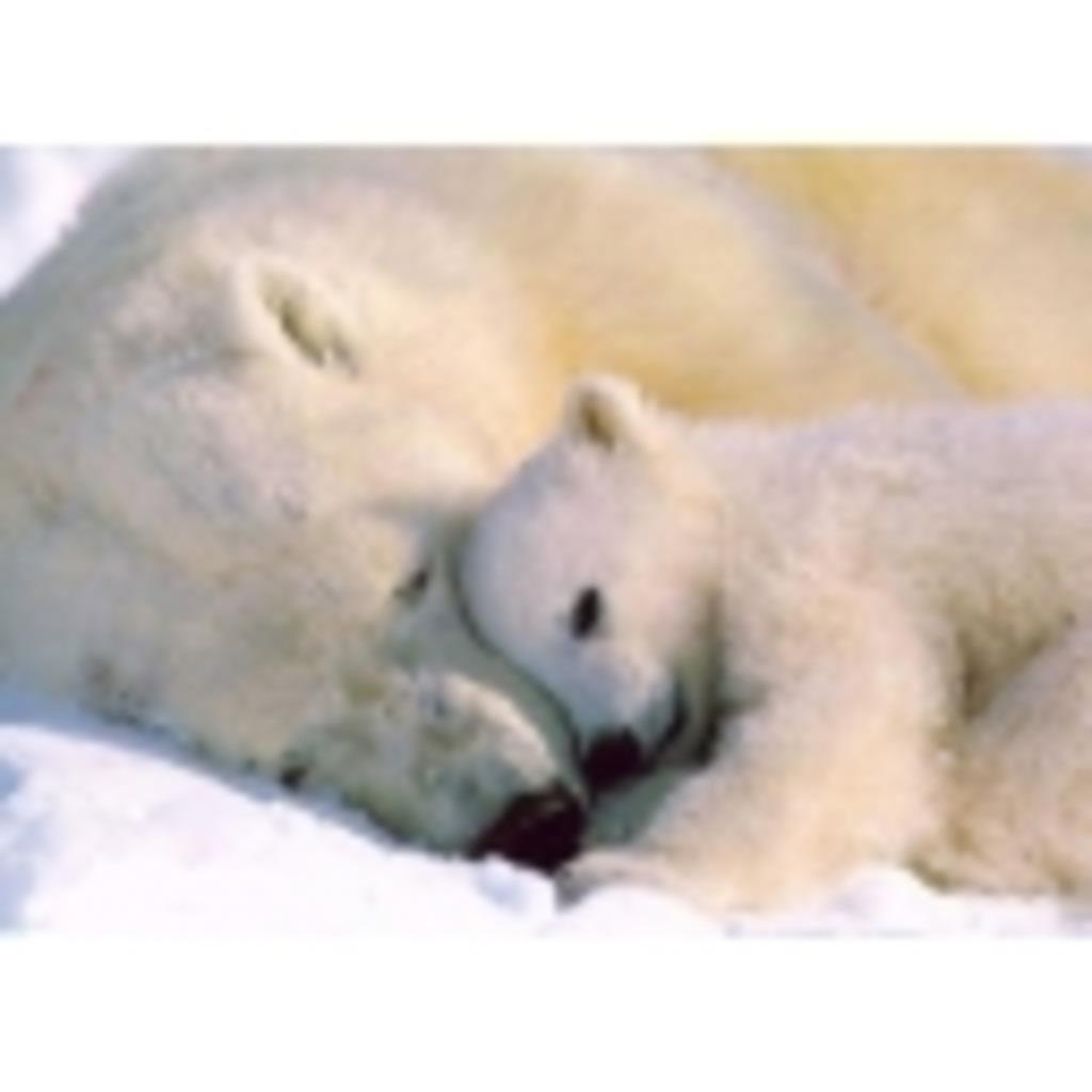 シロクマさんの北極