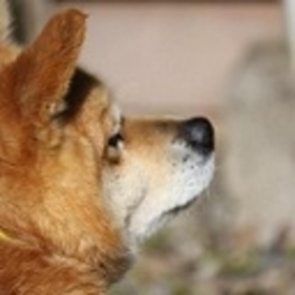 犬小屋(ワンワン)